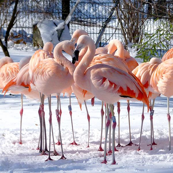 Chile-Flamingos-m.jpg